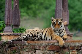 Taxi Services For Ranthambore
