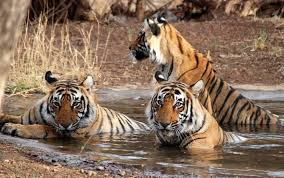 Car Hire for Ranthambore